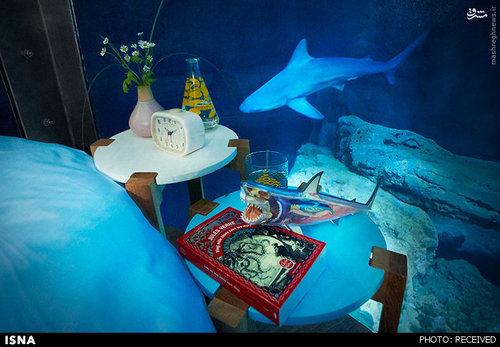عکس زیباترین آکواریوم عکس اتاق خواب توریستی فرانسه توریستی پاریس
