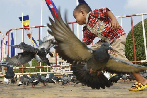 کبوترهای مقابل کاخ پادشاهی در پنوم پن کامبوج