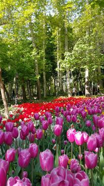 بوستان باغ ایرانی- ده ونک- تهران- سید حسین صالحیان