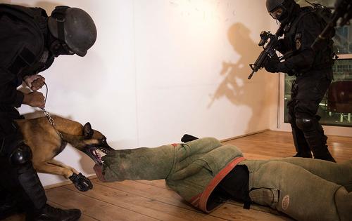 سگ پلیس برزیل در تمرین امنیتی برای المپیک ریو دو ژانیرو