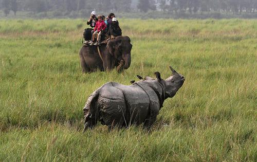 گردشگران سوار بر فیل در حال عکاسی از یک کرگدن شاخ دار در پارک ملی کازیرانگا- ایالت آسام هند