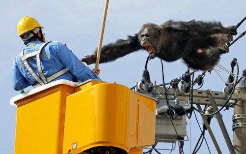 فرار دوساعته حیوانات باغ وحشی در ژاپن