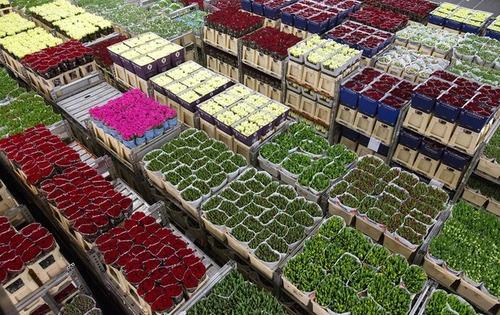 بازار گل – هلند