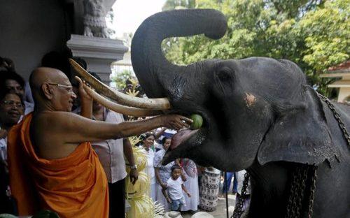 خوراندن هندوانه به فیل در معبد در جشن های سال نو هندوها و تامیل ها