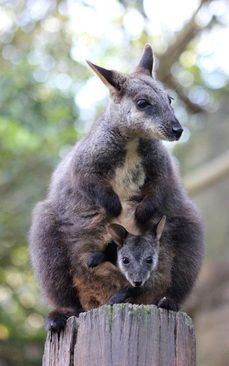 باغ وحش سیدنی