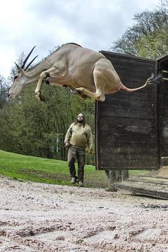 انتقال یک غزال به باغ وحش – جمهوری چک