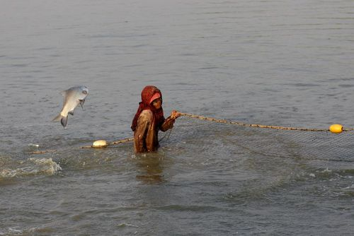 ماهیگیری در رود یانگون میانمار