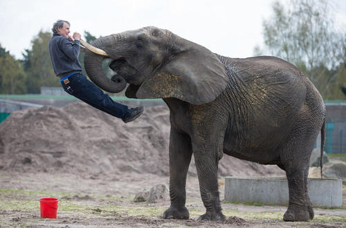 بازی فیل و آموزش دهنده اش – باغ وحشی در آلمان