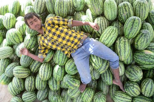 خواب ظهرگاهی در هوای گرم شهر الله آباد هند – بازار میوه