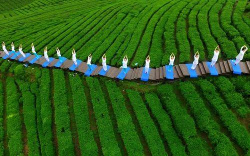 تمرین یوگا در زمین کشت چای در منطقه انشی در استان هوبی چین