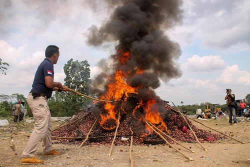 سوزاندن 8 تن پیاز قاچاق در استان آچه اندونزی