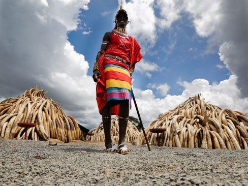 کشف 105 تن عاج فیل قاچاق در کنیا