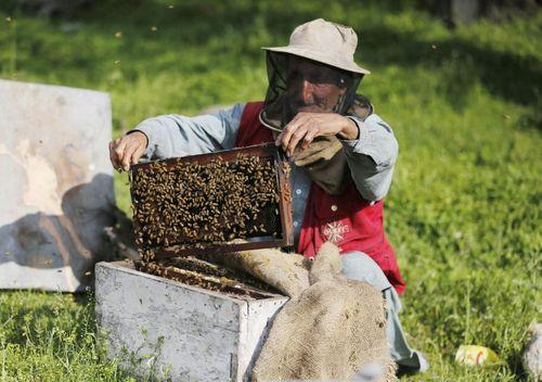 زنبورداری در سرینگر کشمیر