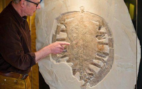 فسیل 150 میلیون ساله یک لاک پشت در نمایشگاه – موزه بامبرگ آلمان