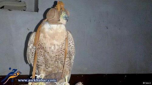 یکی از بالابان های کشف شده از قاچاقچیان در محور جاسک - بندرعباس.