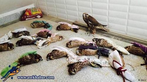 برای قاچاق پرندگان نادر حیات وحش ایران به کشورهای عربی، پرندگان را به شیوهای ابتدایی و دردآور بستهبندی میکنند.