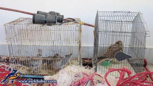 ادوات صید پرندگان شکاری کشف شده از یک صیاد در استان خراسان.