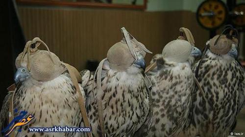 با این حال تعداد محمولههای قاچاق پرندگان ایرانی که توسط محیطبانان کشف میشود بسیار ناچیز است.