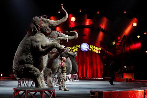نمایش فیل ها در سیرکی در پنسیلوانیا آمریکا