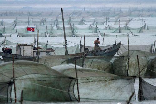 قایق های ماهیگری صیادان کره شمالی در مرز آبی مشترک با چین