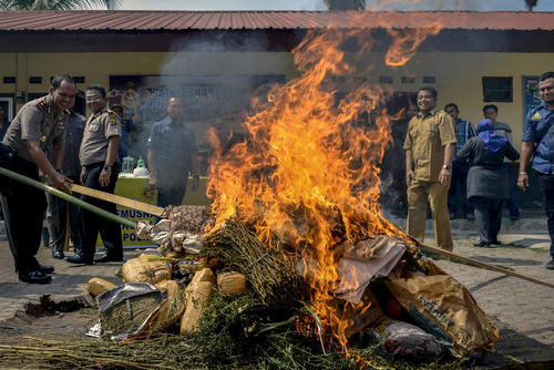 سوزاندن ماری جوانا از سوی پلیس آچه اندونزی