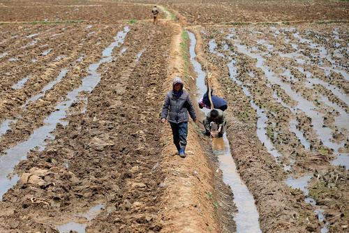 زمین زراعی در حومه شهر پیونگ یانگ کره شمالی
