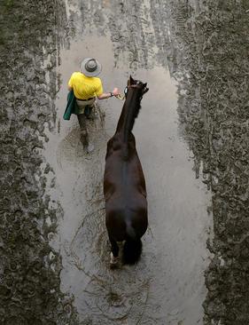 بازگشت از نخستین روز نمایش سلطنتی سالانه اسب ها در وینسور انگلیس