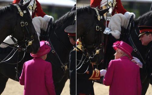 ضربه زدن یک اسب به کلاه ملکه انگلیس در آخرین روز نمایش سلطنتی اسب در وینسور انگلیس
