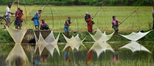 ماهیگیری از رود آسام – هند