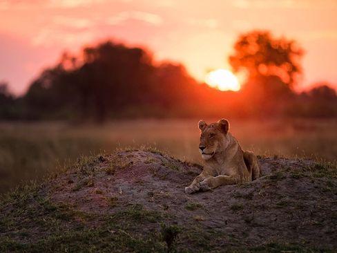 دلتای اوکاوانگو در کشور آفریقایی بوتسوانا