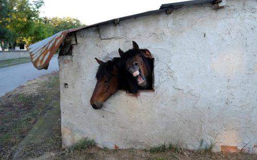 طویله یک خانه در روستایی در نزدیکی شهر آتن یونان