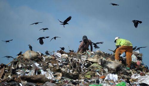 جستجو در یک زباله دانی در شهر کلمبو سریلانکا