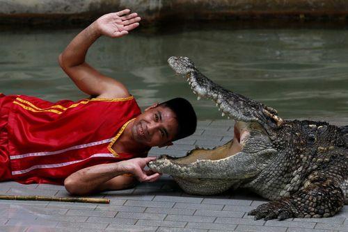سرگرمی های نمایشی یک سافاری پارک در تایلند