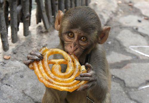 شیرینی خوری میمون – کلکته