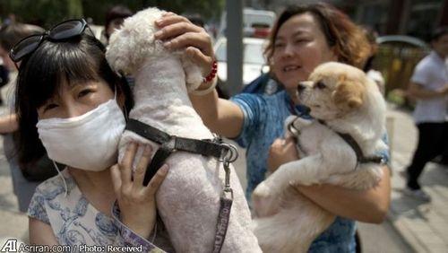 اعتراض فعالان حقوق حیوانات در چین به جشنواره سگ خوری در یولین