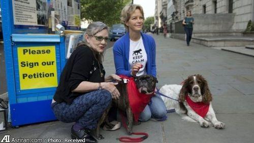 جمع آوری امضا برای کمپین توقف آزار سگ ها در چین از سوی فعالان حقوق حیوانات در لندن