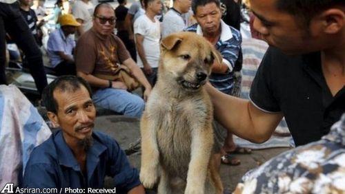 خرید و فروش سگ در جریان جشنواره یولین در ژوئن 2015