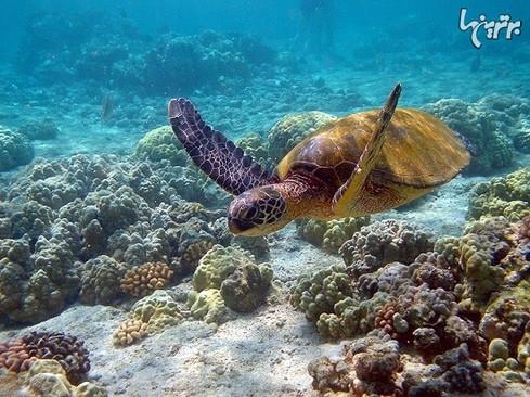 پارک دریایی 1 میلیون هکتاری در مالزی