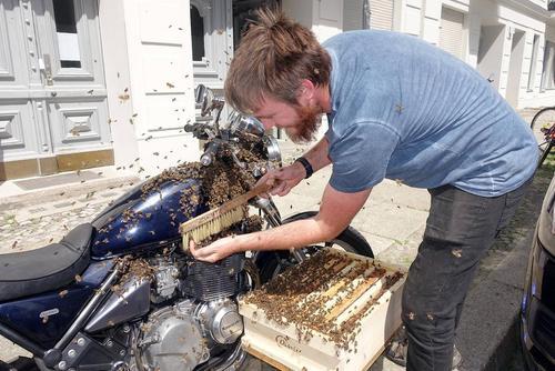 زنبورهای یک زنبوردار آلمانی روی موتور او نشسته اند