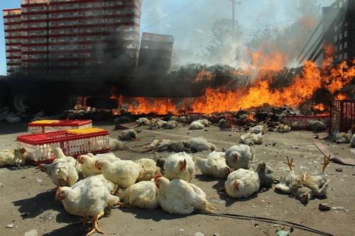 آتش زدن یک کامیون حامل مرغ در جریان درگیری بین نیروهای امنیتی مکزیکی و معلمان معترض