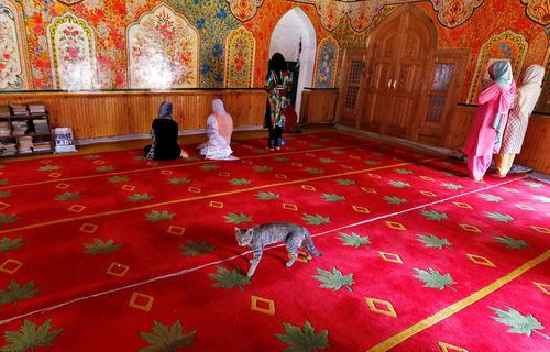 حضور گربه ها در مسجدی در سرینگر کشمیر