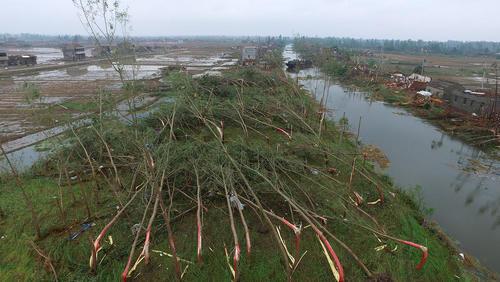 قطع درختان در اثر توفان – استان جیانگسو در چین
