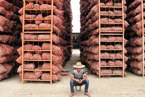 گونی های سیر در بازاری در شهر جین شیانگ چین