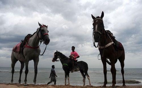 کرایه دهنده اسب در انتظار مشتری – ساحل چنای در هند