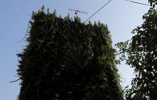یک درخت در بیروت