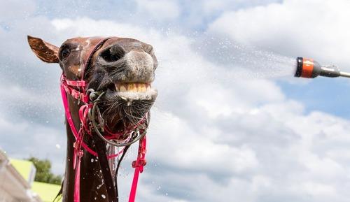 شستشوی یک اسب در مسابقات اسب سواری در هامبورگ آلمان