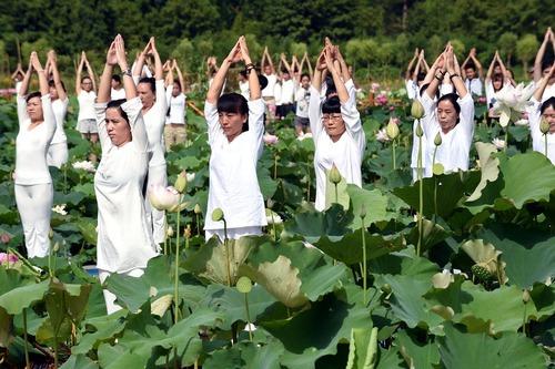 یوگای دسته جمعی در یک زمین نیلوفر آبی - چین