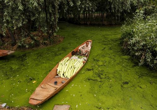 یک فروشنده سبزیجات روی قایق – کشمیر