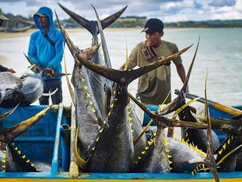 صید ماهی در بالی اندونزی