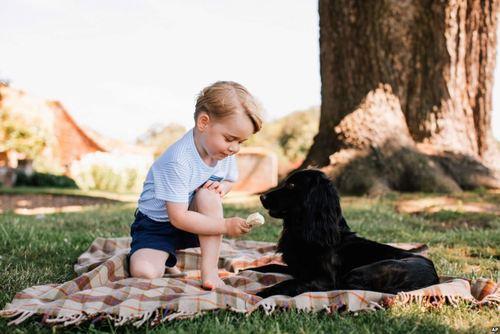 بازی پرنس جورج نتیجه 3 ساله ملکه انگلیس با سگ خانوادگی شان . خانواده سلطنتی انگلیس این عکس را در سومین سالگرد تولد جورج منتشر کرده است